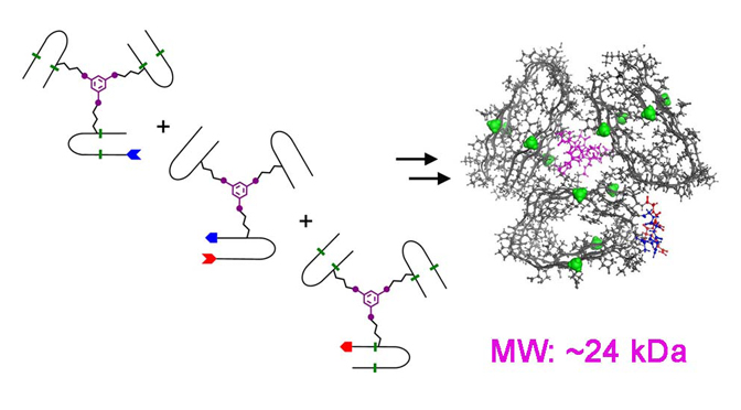 demonstrated a novel approach to study molecular recognition in amyloids
